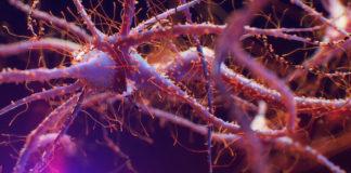 Öğrenme, Hafıza, Nöroplastisite